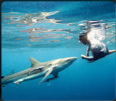 Dive into adventure with a custom shark tour with California Shark Diving