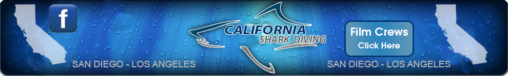 Take a shark diving trip with California's most qualified shark experts at California Shark Diving.