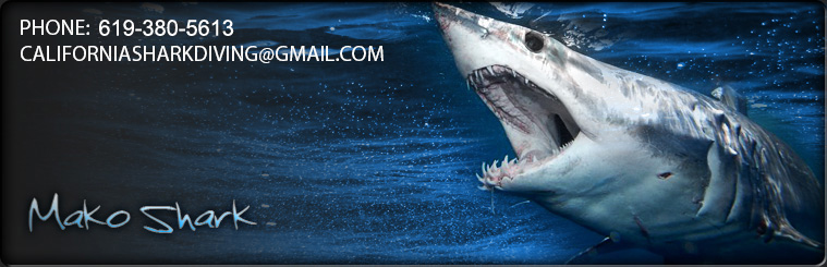Join California Shark Diving for personalized Shark Diving Trips.