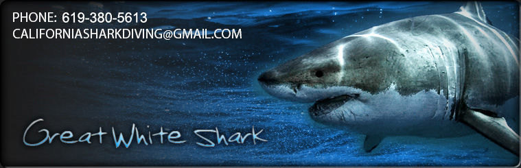 Come face to face with great white sharks off of the California coast.
