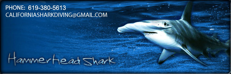 Ready to swim with the sharks? Join California Shark Diving today for your shark adventure.